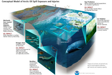 arctic-food-webs-oil-impacts-illustration_noaa